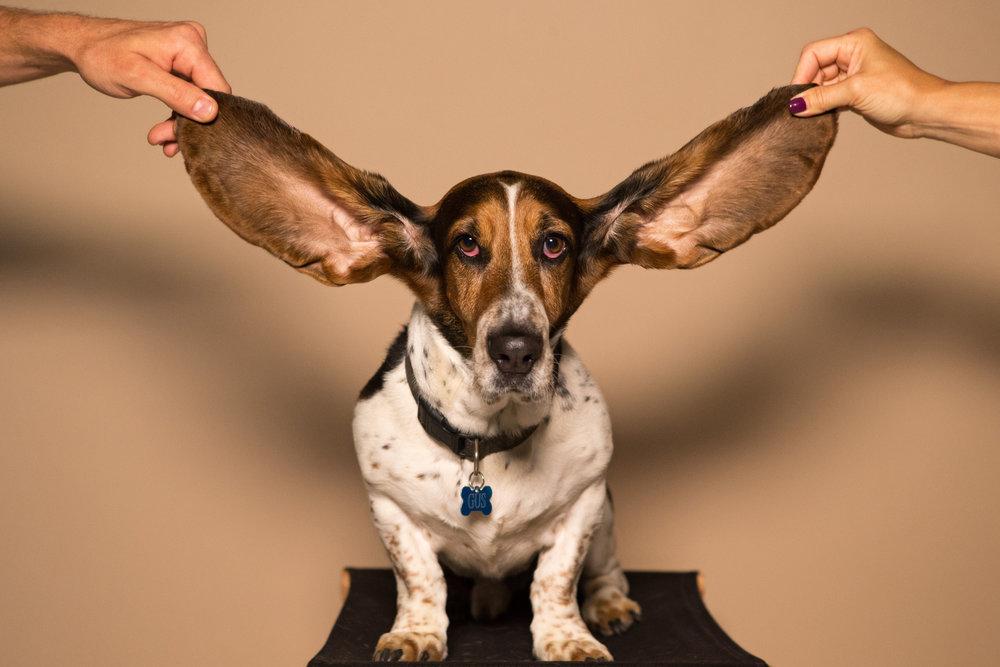 We're all ears!