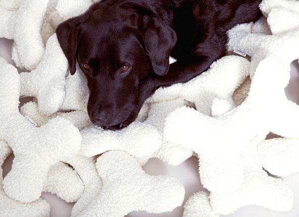 dog toys and labrador puppy