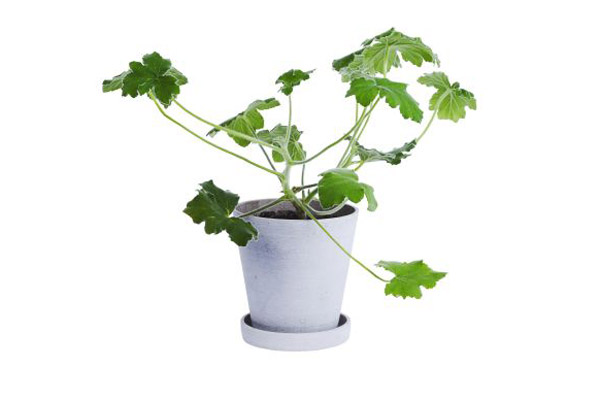 Hay_flower_pot_with_saucer_2.jpg