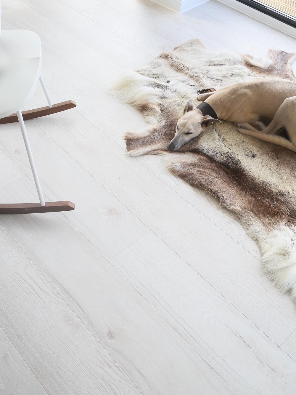 Whippet on fur rug | Design Hunter