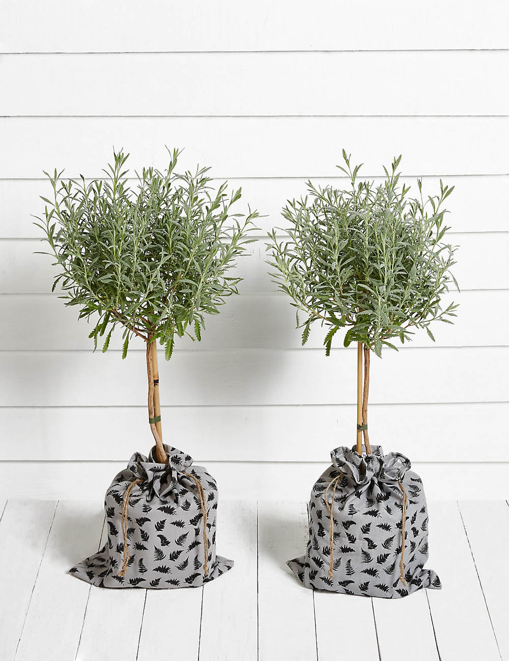 Standard lavender trees | M&S