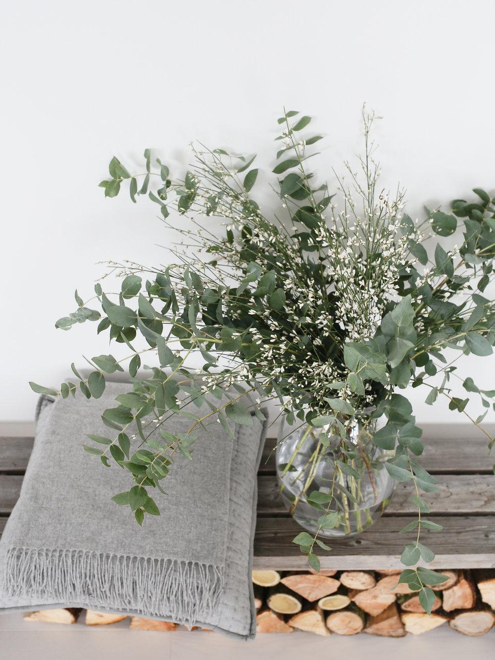 Eucalyptus and genista