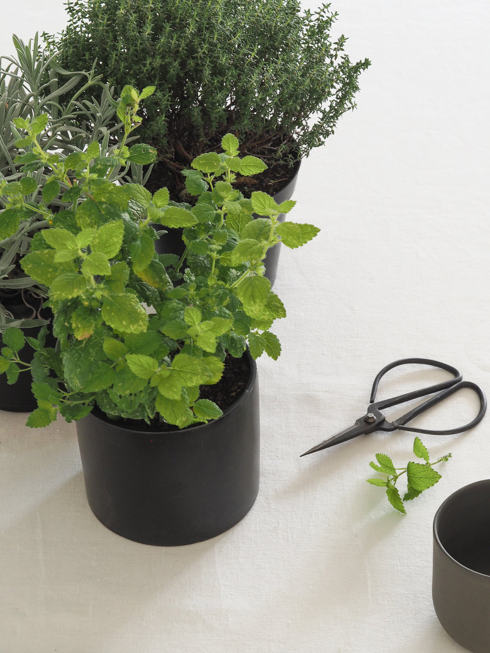 Fresh Herbs on linen table cloth | Design Hunter