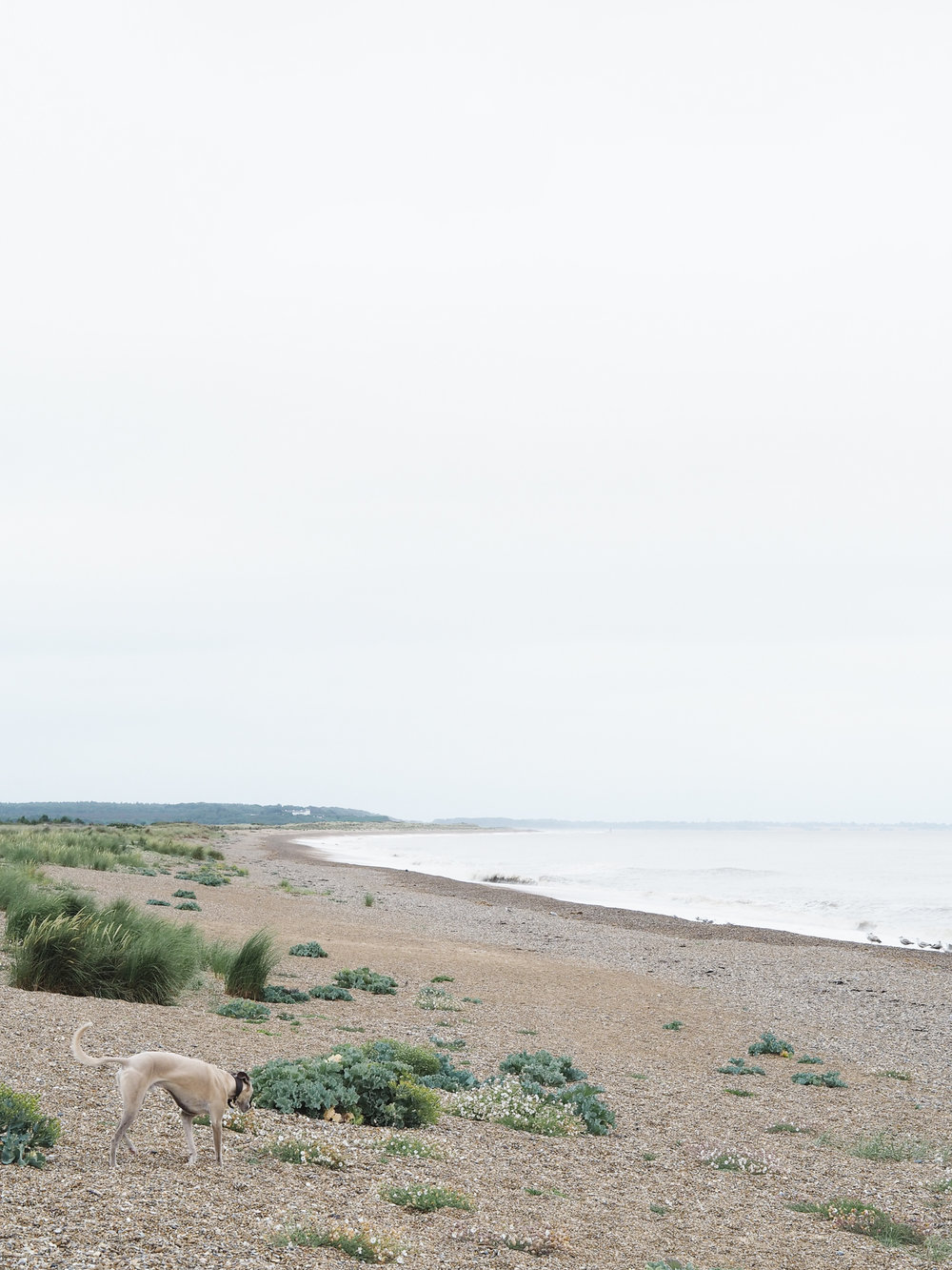 Albert on Sizewell Beach | Design Hunter