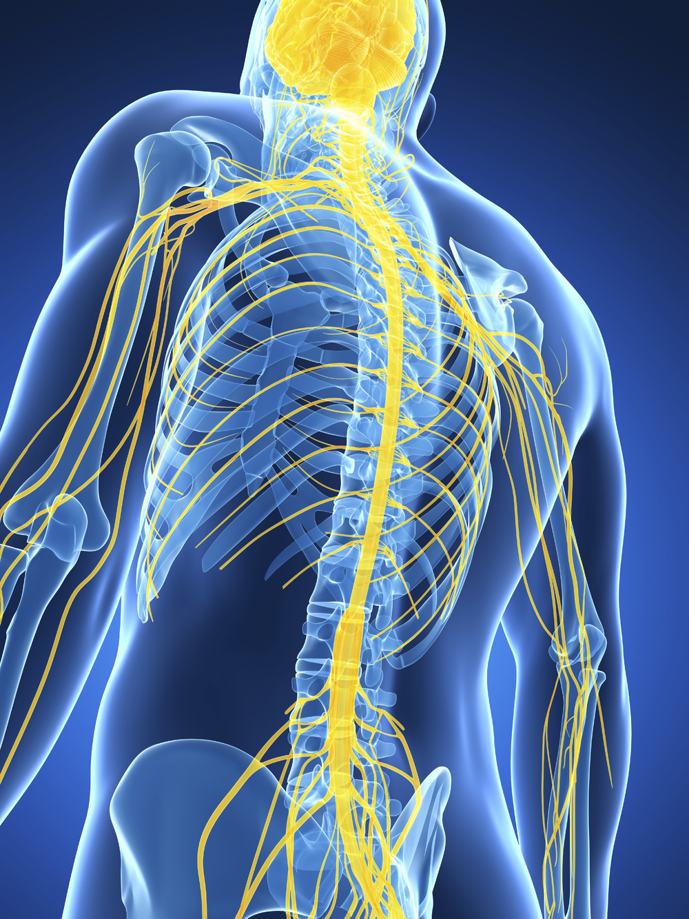 Your body's ability to respond, balance and recover are all controlled by the Central Nervous System. A spinal assessment can help ensure it's proper functioning.