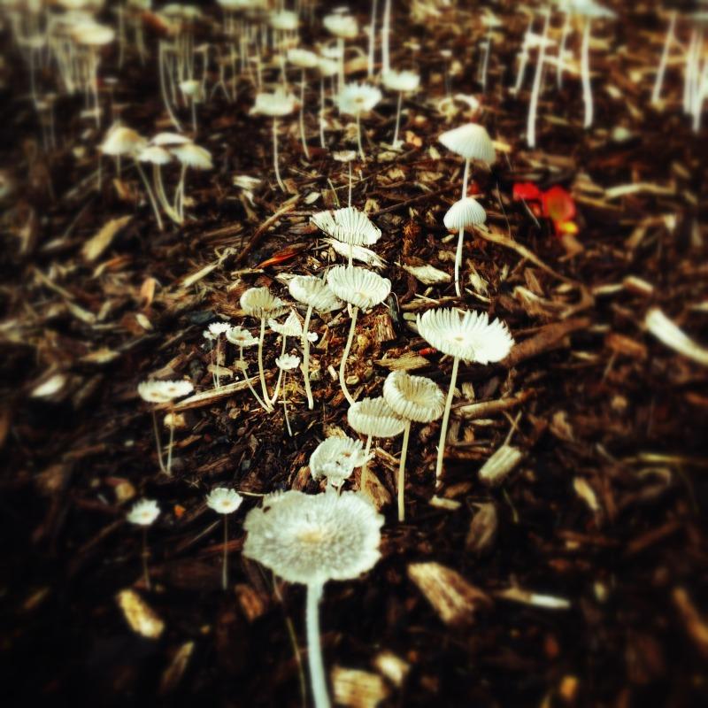 Mycology, September 6, 2012 (Styled by David Ploskonka)