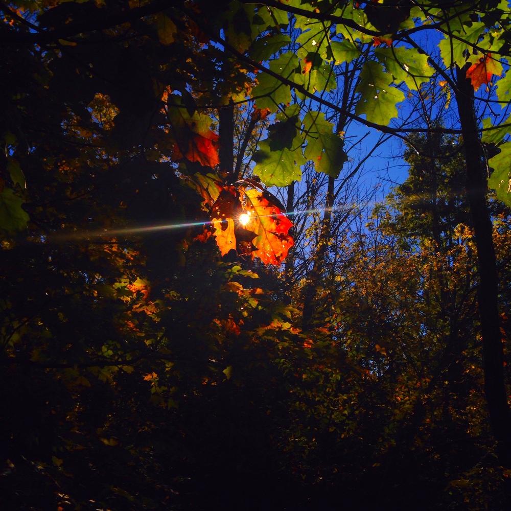 Photo: David Ploskonka, October 12, 2014