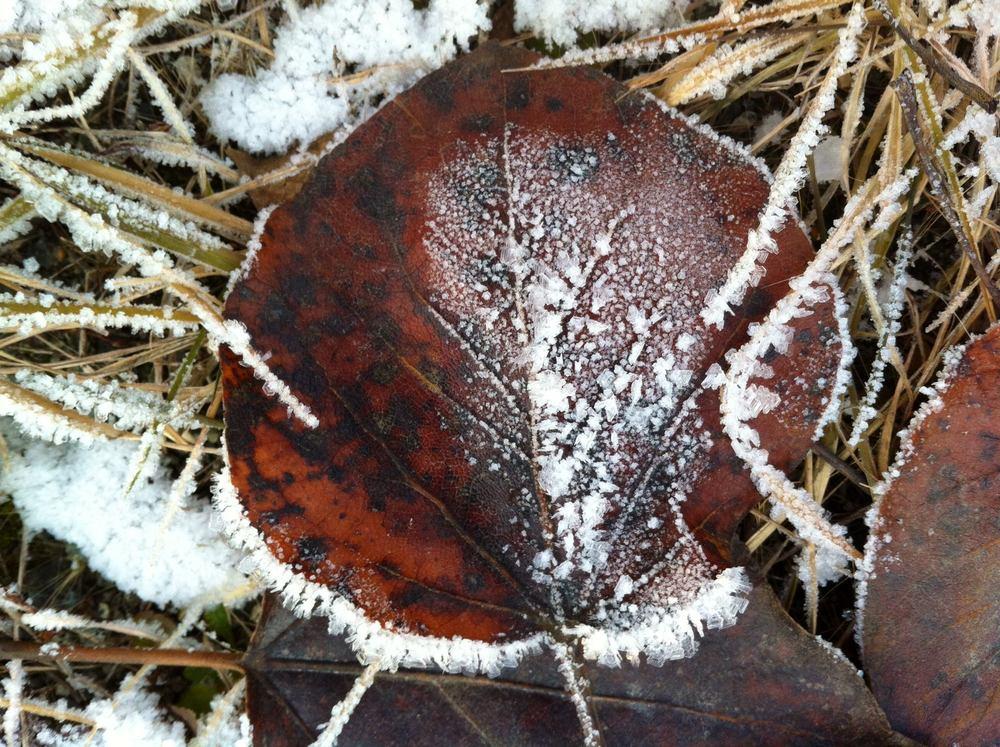 mary-frost-2.jpg