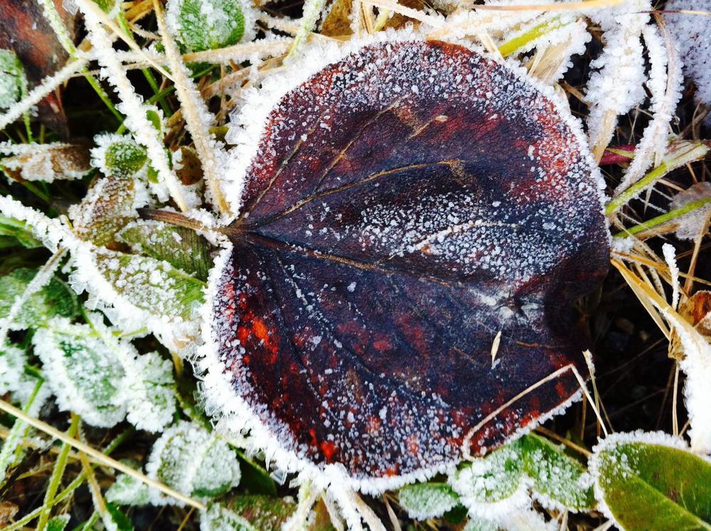 mary-frost.jpg