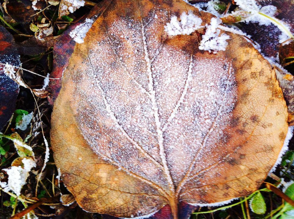 mary-frost-4.jpg