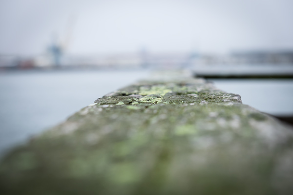 Mossy planks on the port's jetties.