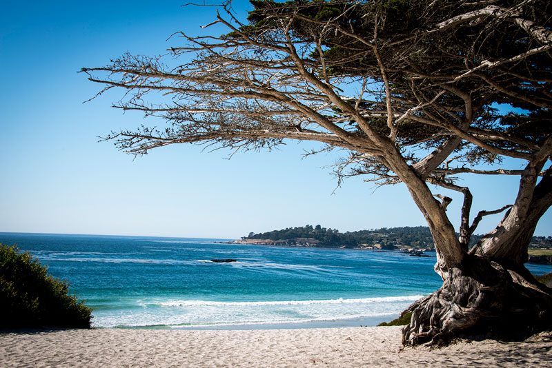 (Carmel's white sand beach)