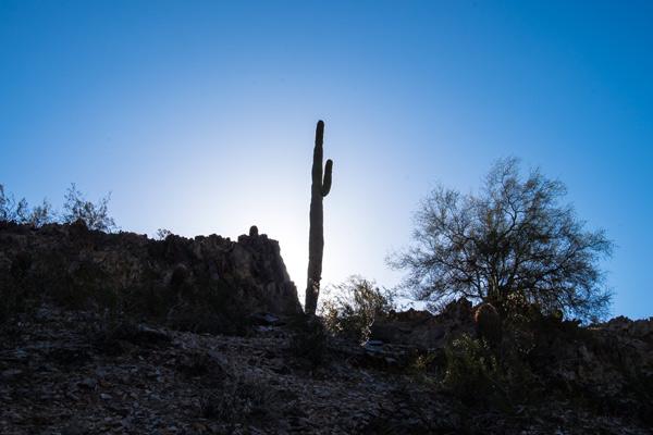 adage_SW_cactus2.jpg