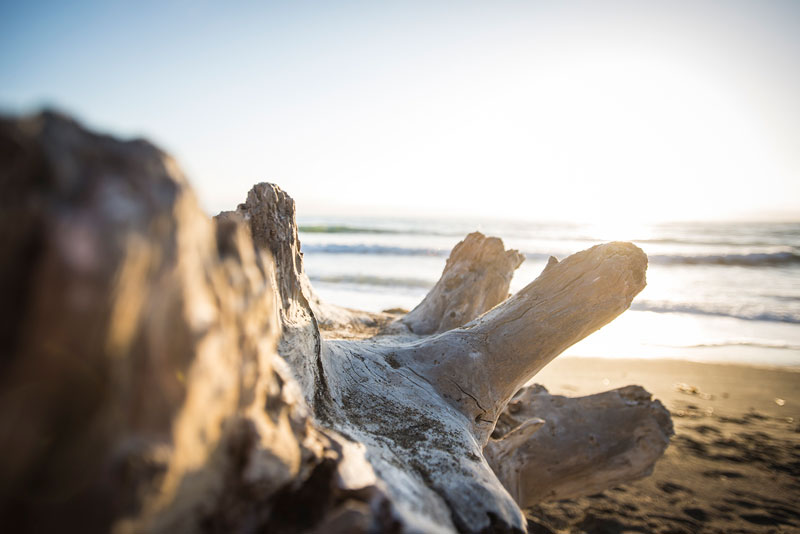 Drift wood in Cambria