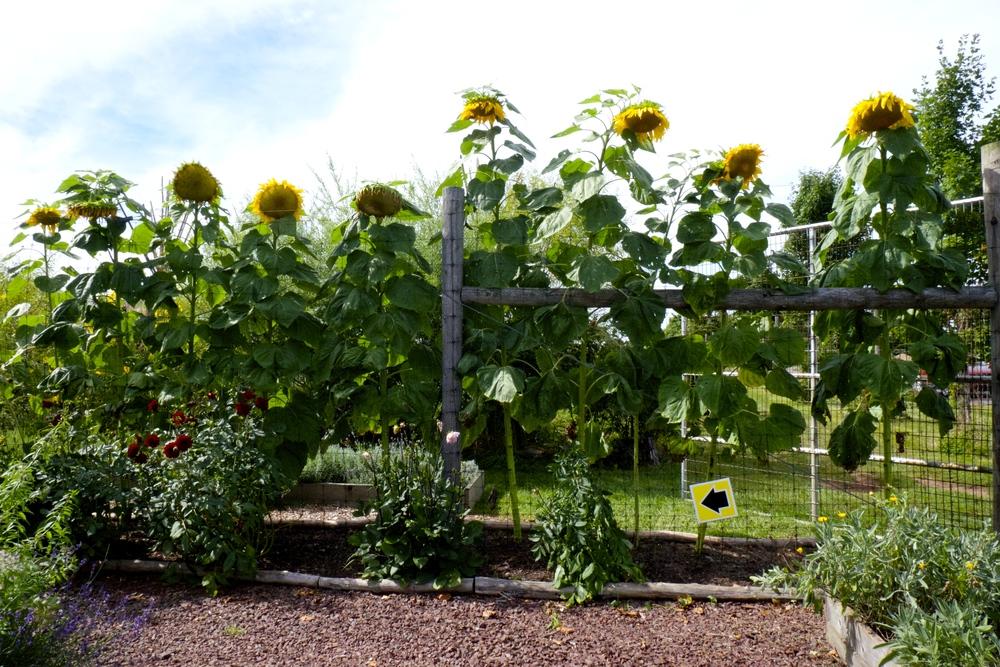 Blooming Glen Farm