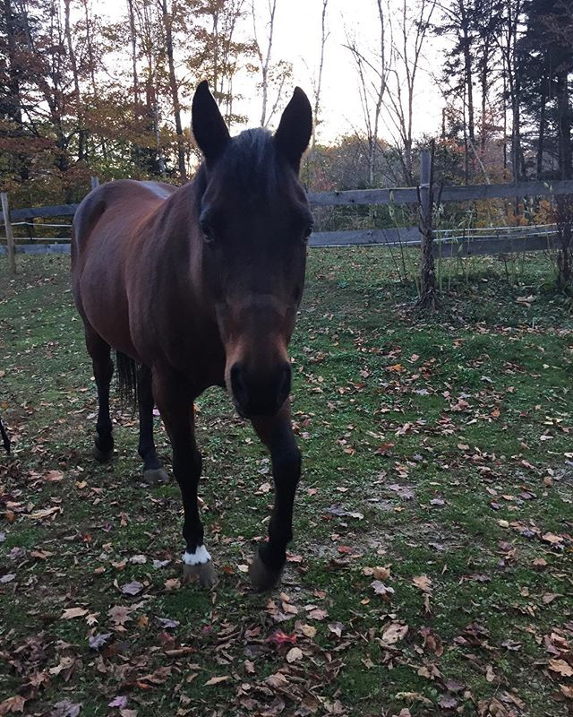 Meet our new friend, Admiral! Trail running views on point 👌#trailrunning #newhampshire #loverunning #fall #horses