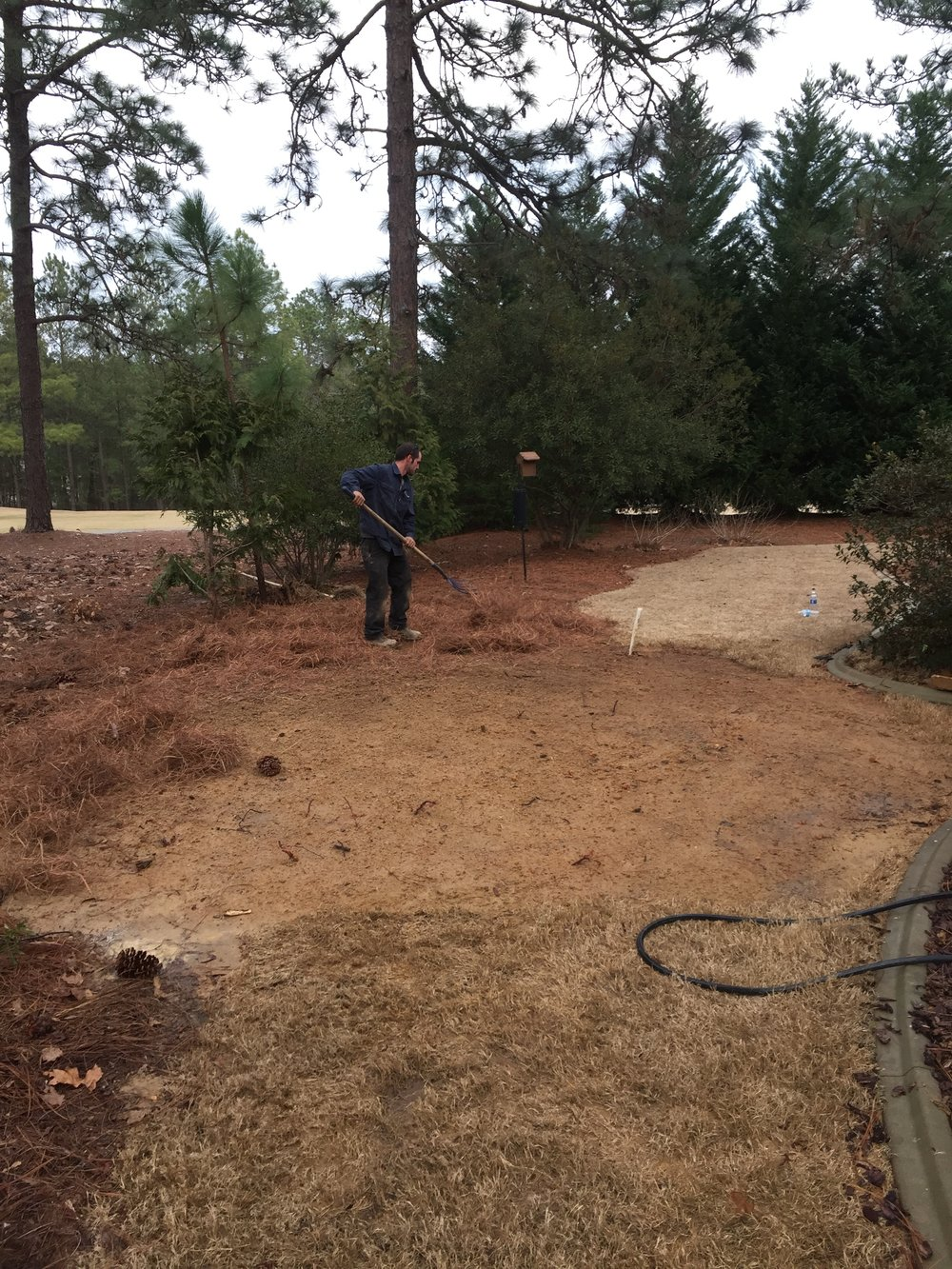 Post Septic Tank Replacement Landscaping 3