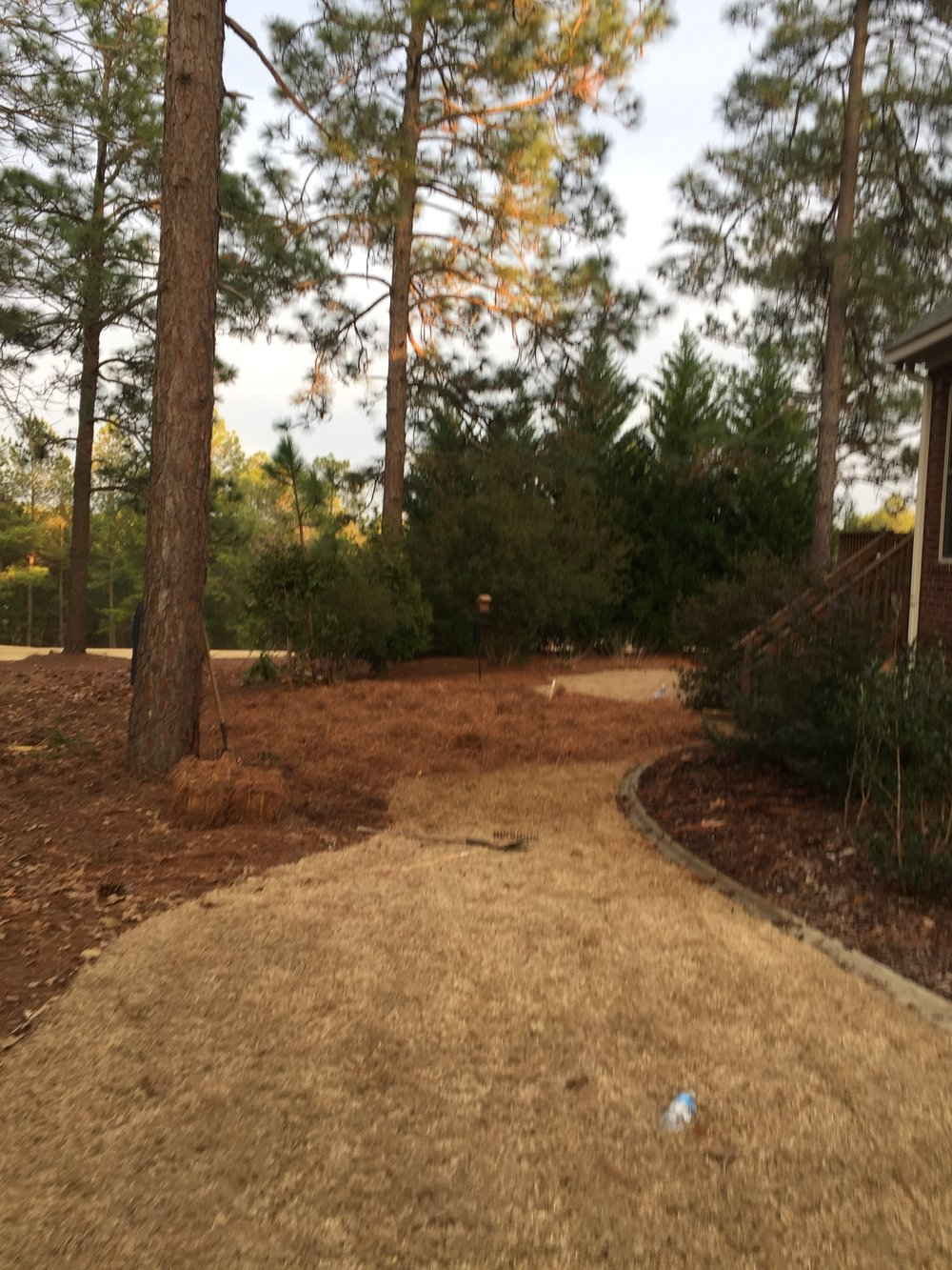 Septic Tank Installation After Pine Straw