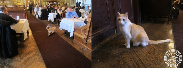 Image of Polo the cat at Le Train Bleu in Gare de Lyon Paris, France