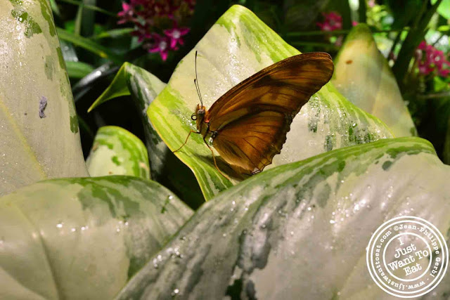 Image of Butterfly at the Museum of Natural History, NYC, New York