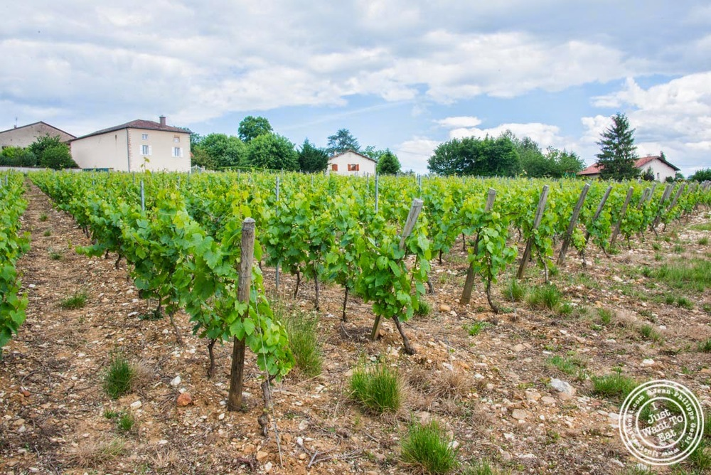 image of Vineyard in Bourgogne, France