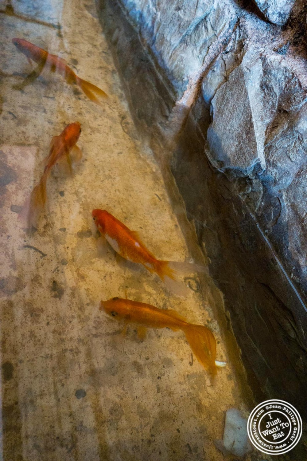 image of fishes at El Anzuelo Fino in Woodhaven, NY