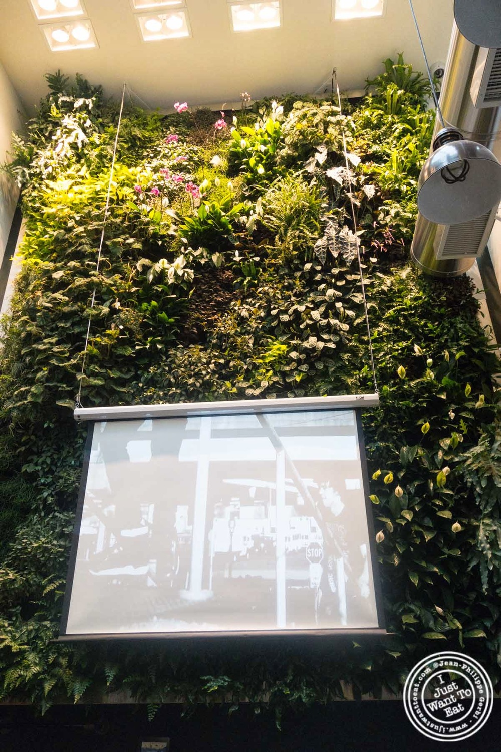 image of suspended garden at Hogar Dulce Hogar, a Basque Bakery in Soho