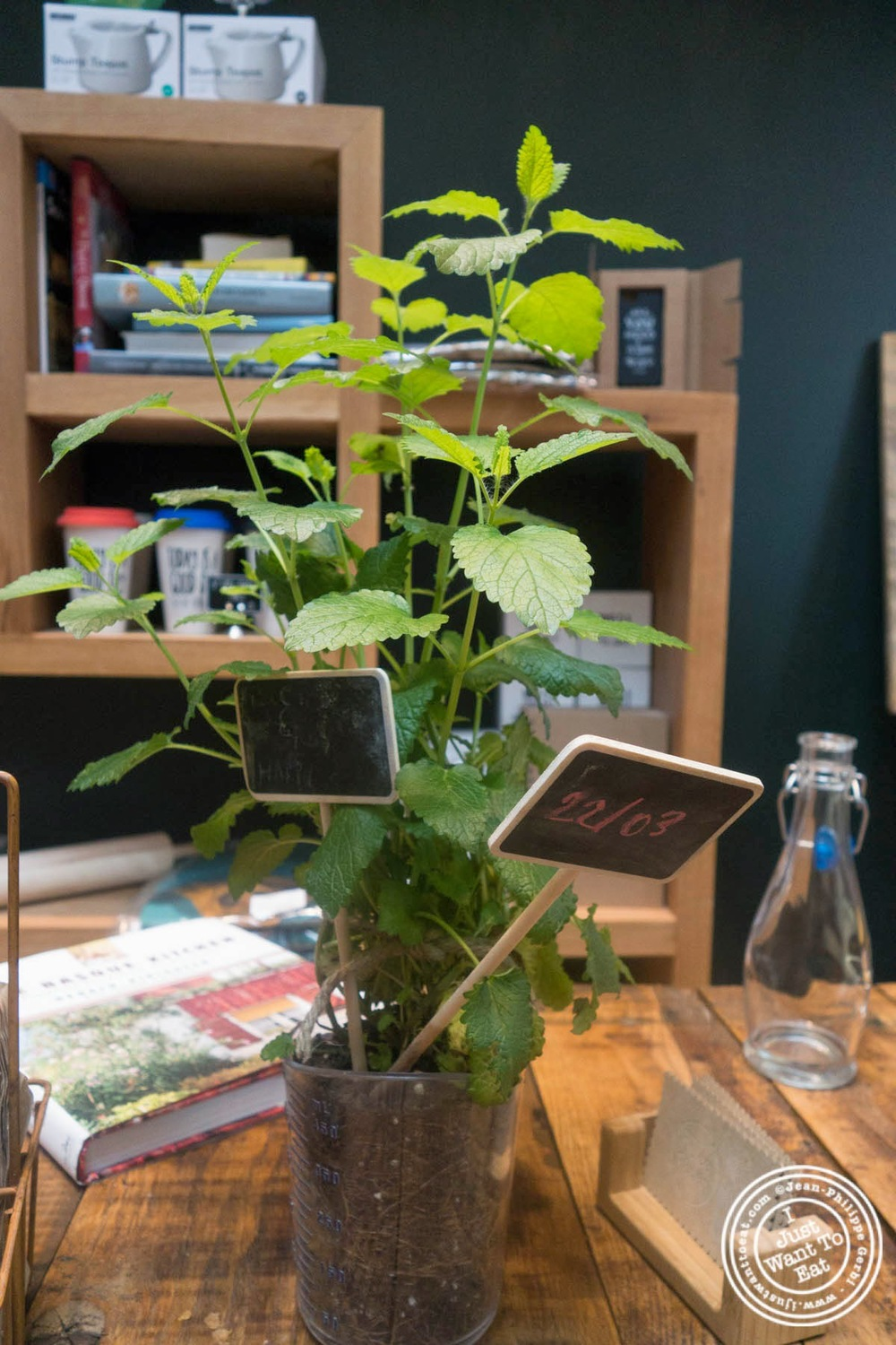 image of mint plant at Hogar Dulce Hogar, a Basque Bakery in Soho