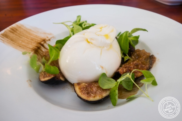 Burrata at Torino, Italian Restaurant in New York, NY