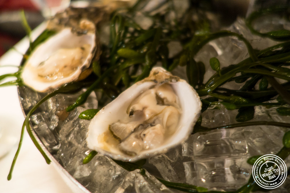 Oysters at Rue 57 in NYC, New York