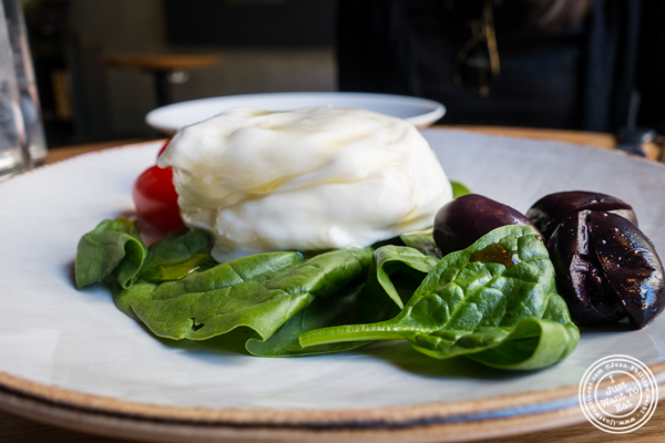 Burrata at Obica, Italian restaurant in NYC, New York