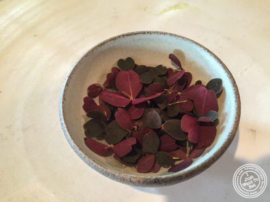 Rose tea at Noma in Copenhagen, Denmark