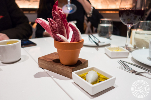 Purple endives and blue cheese spread at Andanada 141 in NYC, New York