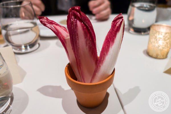 Purple endives at Andanada 141 in NYC, New York