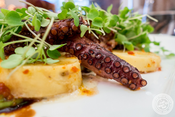 Grilled octopus salad at Gran Morsi, Italian restaurant in TriBeCa, NYC