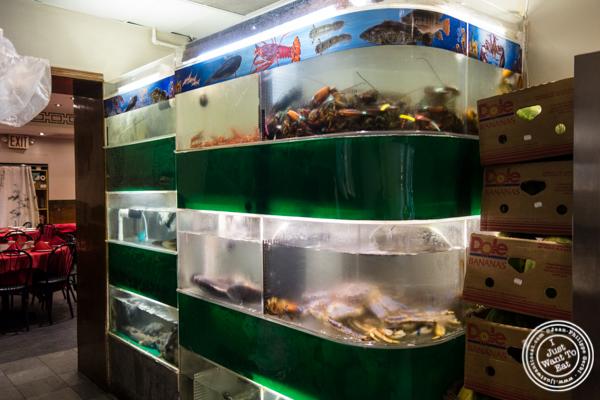 Aquarium at Bite of Hong Kong in Chinatown, NYC
