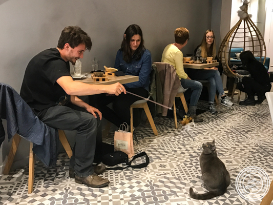 Monsieur Bruno playing with patrons at Neko Cafe in Grenoble, France