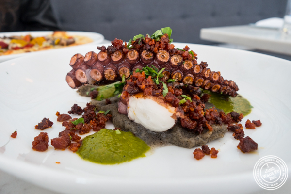Charred octopus at Porter Collins in Hoboken, NJ