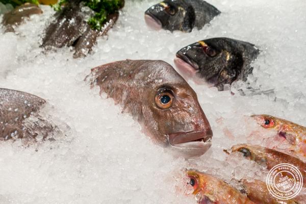 Fish at Estia in Philadelphia, PA
