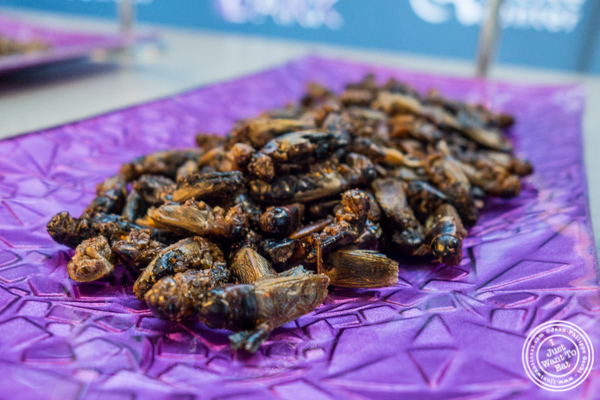 Smokey BBQ crickets at The Liberty Science Center in Jersey City, NJ