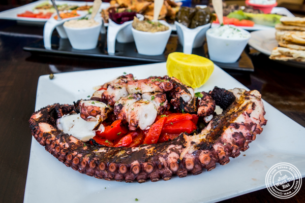 Octopus at Greek Town in Hoboken, NJ