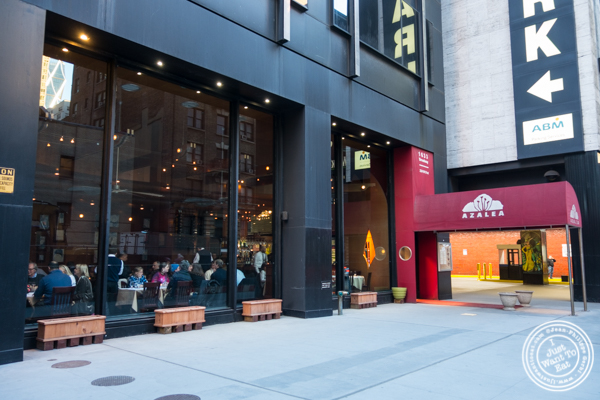 Azalea in the Theater District, NYC, NY