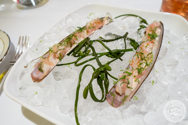 Razor clam at Marea in NYC, NY