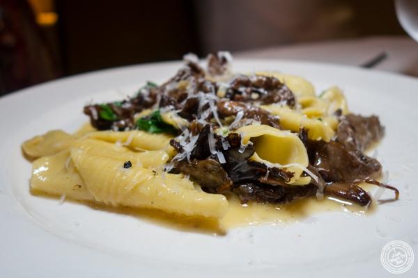 Garganelli pasta at Babbo Ristorante e Enoteca in NYC, NY