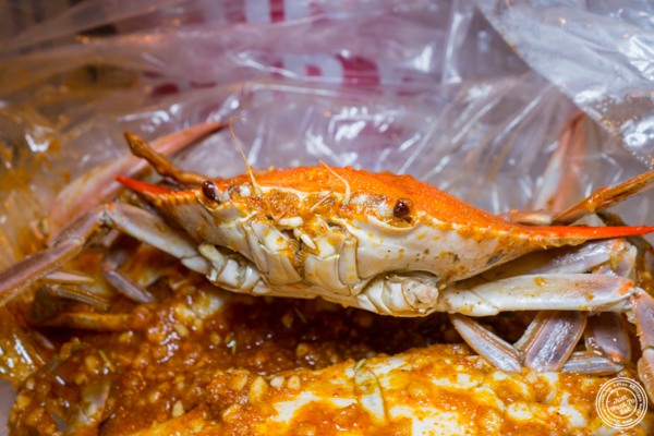 Blue crab at Hot'n Juicy Crawfish in NYC, NY