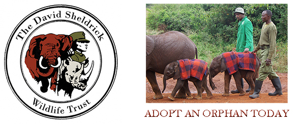 david-sheldrick-wildlife-trust