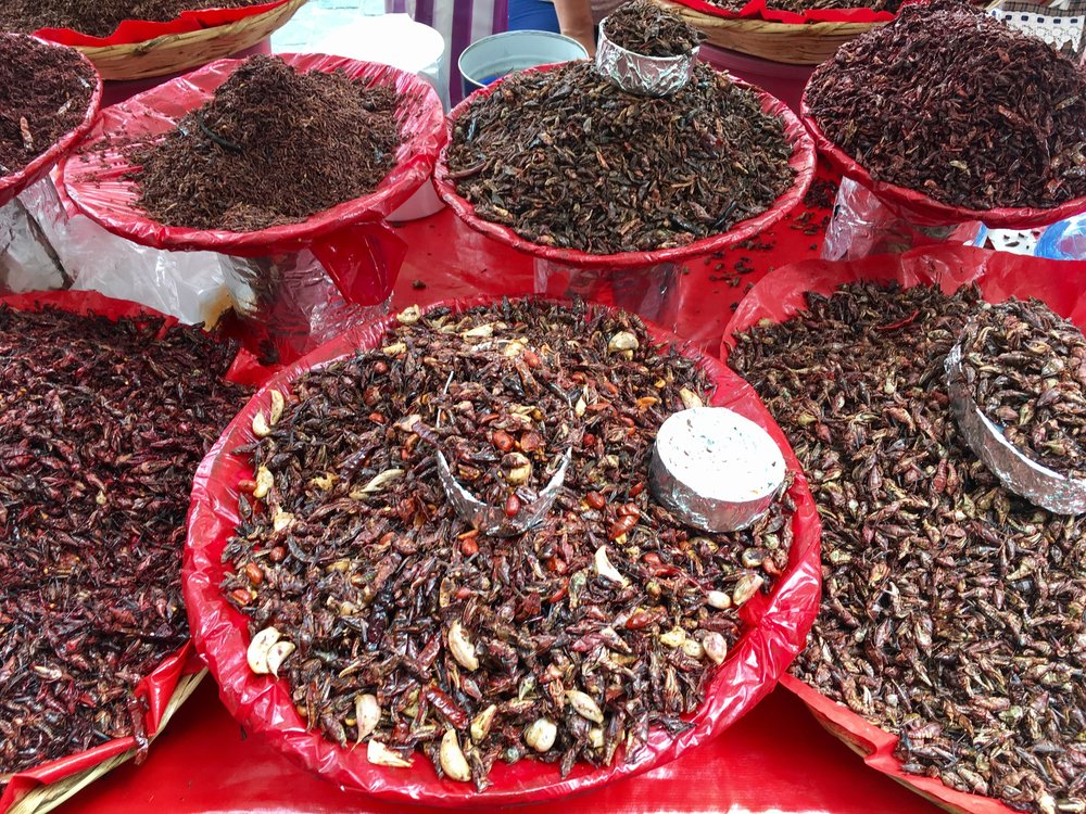 Grasshoppers for every taste and size preference.