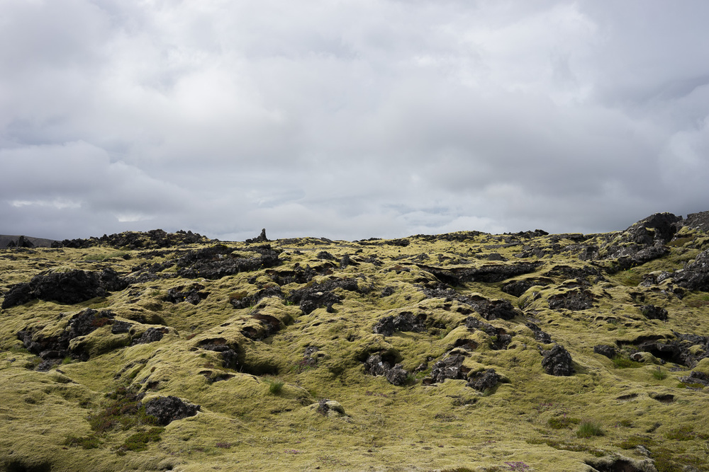 Mossy terrain is everywhere in Iceland. Photo by Jonnie Hallman!