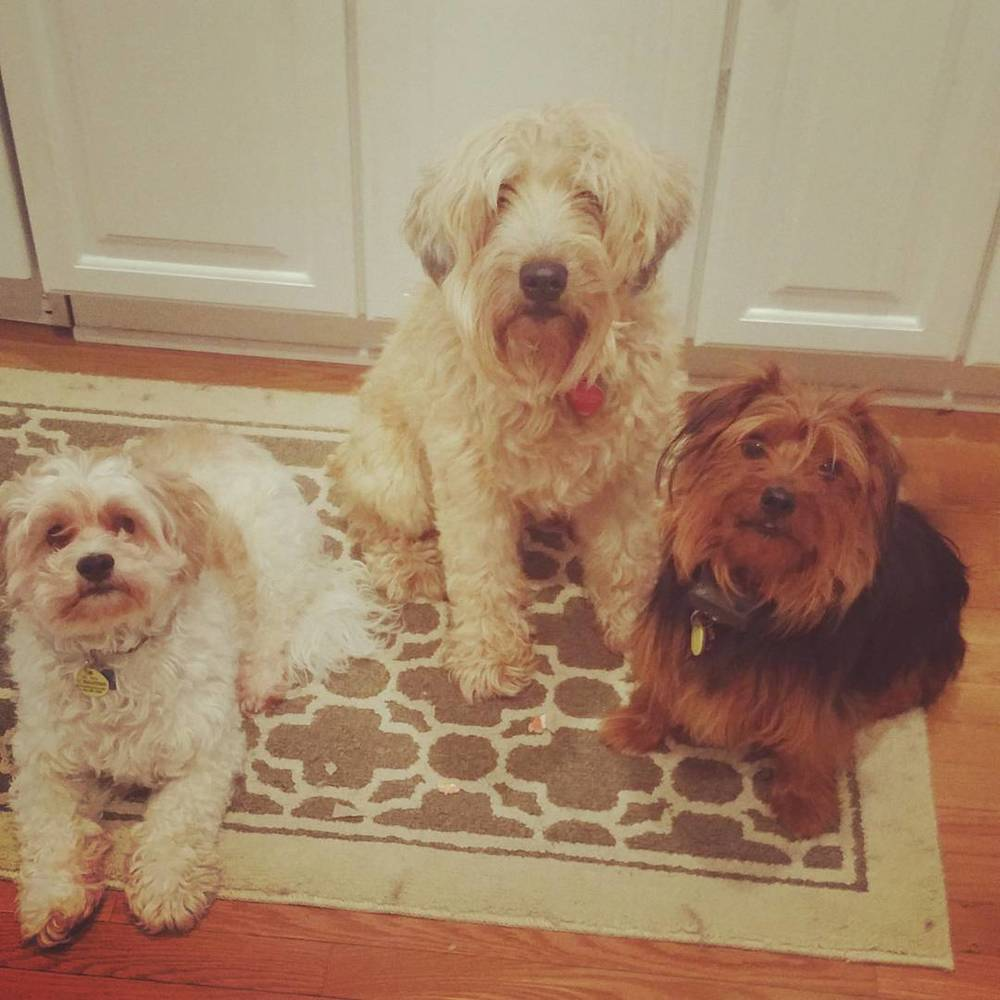 Willie, Bailey & Poojah