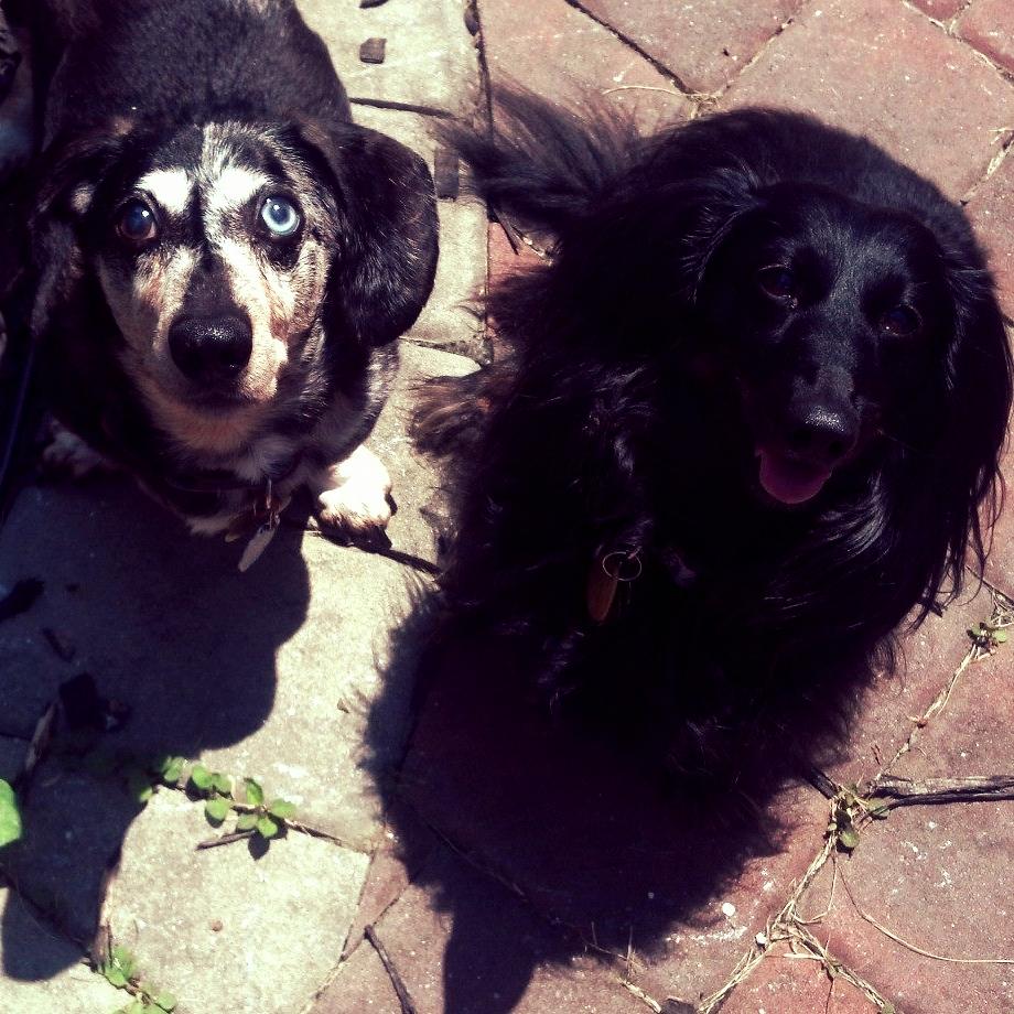 Buddy, Precious & Braveheart